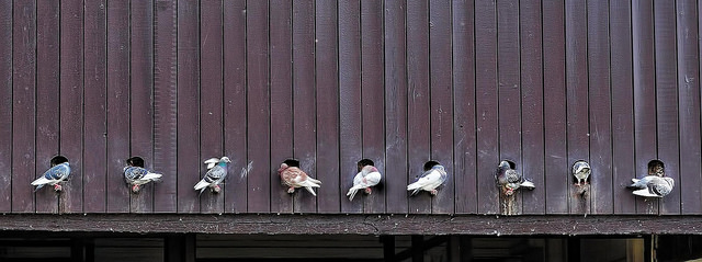 pigeonholed (steve taylor flickr)